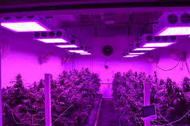 t5 vs led grow lights home lighting grow lights led vs cfl best 2017grow marijuana light