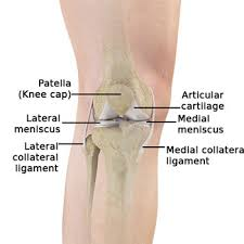 Lateral Collateral Ligament Ankle Knee Arthritis Cincinnati Oh Knee Injury West Chester Dayton Oh