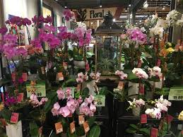 whole sale flowers flowers wholesale flowers costco wegmans wedding flowers
