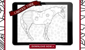 trail painted ponies official u2013 shopping