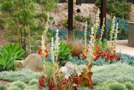 rock pathway in xeroscape garden southwestern landscape orange