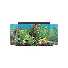 Fluval 125 Cabinet Large Fish Tanks For Sale Big Fish Tanks U0026 Aquariums Petco