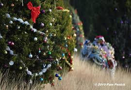 mysterious elves decorate loop 360 trees digging
