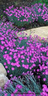 Rock Garden Cground 293 Best Rock Gardens Ground Covers Images On Pinterest Garden