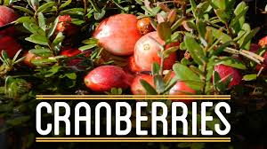 thanksgiving foods to make cranberries how to make everything thanksgiving dinner 3 5