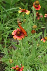 florida native plants list native florida wildflowers february 2014