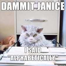 Angry Cat Meme - angry office cat meme on imgur