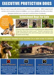 trained german shepherd for sale rising s k9 rising s k9s
