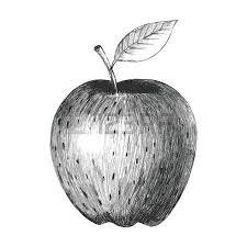 sketches of a banana royalty free cliparts vectors and stock