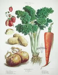 Vegetable Garden Blogs by Botanical Resource Album Vilmorin U201cvegetable Garden U201d Kitchen