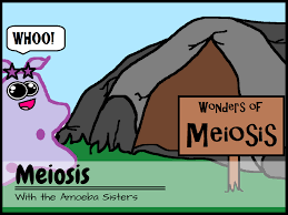 amoeba sisters video with worksheet cells pinterest
