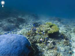 Coral Reefs Of The World Map by Google Maps Coral Reef Panoramas Business Insider