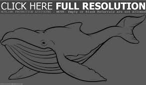 orca coloring pages clipart panda free clipart images