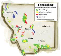 Bozeman Montana Map by Lobbying Against A Hobby Disease Keeps Bighorn Sheep At The Edge
