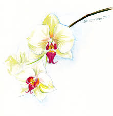 14 sketch drawings of flowers 牡丹欧美纹身手稿 排行榜大全