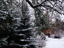 free stock photo of garden snow tree