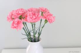 carnation flowers how to decorate with carnations tutorial diy playbook