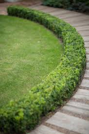 top 25 best front yard hedges ideas on pinterest front yard