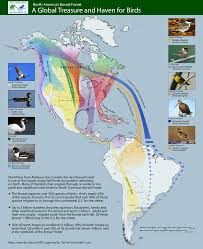 North America Forest Map by Highlighted Migration Routes Boreal Songbird Initiative
