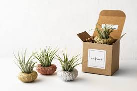 best friend christmas gift set of 3 sea urchin air plant
