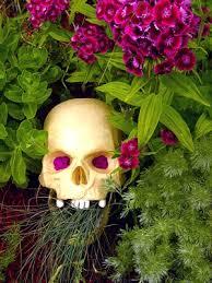 Common Plant Diseases - prevent common plant and flower diseases flowering garden guide