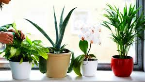best house plants the 6 best houseplants for clean air indoors countryside network