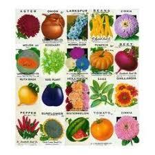 flower seeds wholesaler u0026 wholesale dealers in india