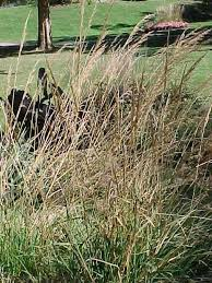 best ornamental grasses and vines