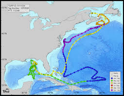Map Gulf Of Mexico by Deepwater Horizon Oil Spill Impacted Bluefin Tuna Spawning Habitat