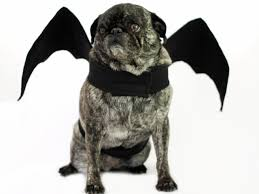 diy bat wings halloween dog costume how tos diy