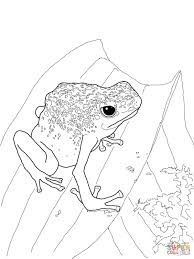 blue poison dart frog coloring page free printable coloring pages
