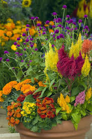 Plant Combination Ideas For Container Gardens - 34 best fall containers u0026 plants images on pinterest fall