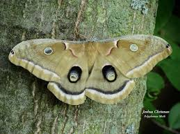 Michigan wildlife images Shots of michigan 39 s rarest and most beautiful wildlife jpg