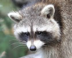 Michigan wild animals images Rabies reports from michigan and new jersey and a chronic wasting jpg
