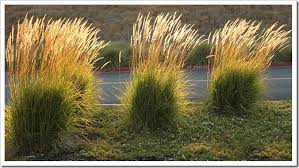 succulents and more ornamental grasses light up ikea parking lot