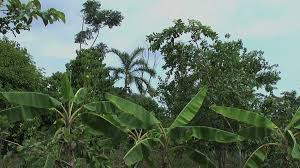 jungle garden with tall plants stock video footage videoblocks