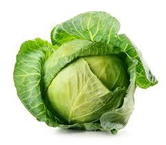 white cabbage is healthy green vegetable u2013 why u2013 fresh design pedia