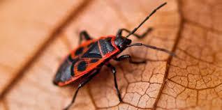 wanzen nabu insekten rassismus trifft wanzen warum wir die schönen schützen