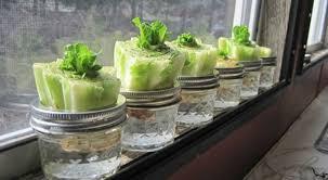 cuisiner chez soi et vendre ses plats 10 légumes à faire repousser à l infini chez soi bio à la une