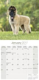 belgian sheepdog gifts belgian shepherd calendar 2017 dog breed calendars 2016 2017