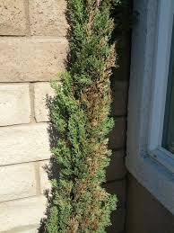 browning cypress