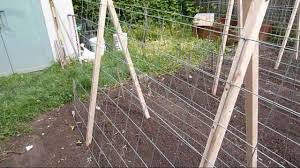 How To Grow Cucumbers On A Trellis Garden Trellis For Cucumbers And Melons Youtube