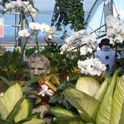carolina home u0026 garden nursery 16 photos nurseries u0026 gardening
