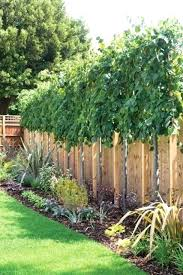 Landscaping Ideas For Backyard Privacy Fence Line Landscaping Ideas Onlinemarketing24 Club