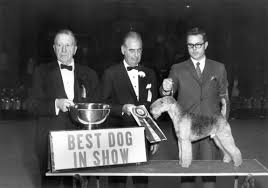 affenpinscher crufts 2016 terriers were once the greatest dogs in the world fivethirtyeight
