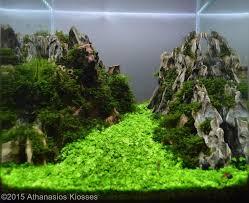 Aga Aquascaping Contest 250 Best 수족관 Images On Pinterest Aquascaping Aquarium Ideas