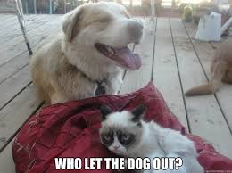 who let the dog out another grumpy cat quickmeme