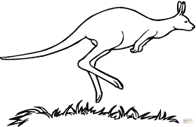australian kangaroo coloring page free printable coloring pages