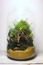 525 best terrarium inspiration images on pinterest plants