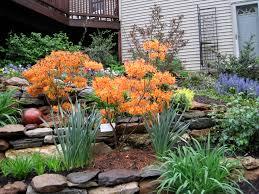 Rock Garden Perennials by 104 Best Coastal Rock Garden Images On Pinterest Gardens Garden